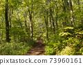 아오모리 현 시라 카미 산지 十二湖의 너도밤 나무 숲 73960161