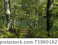 아오모리 현 시라 카미 산지 十二湖의 너도밤 나무 숲 73960162