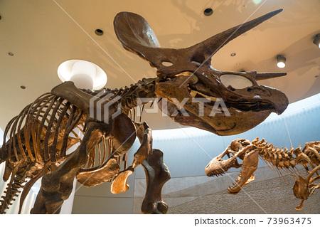 恐龍化石 73963475