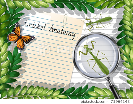 Blank paper top view with leaves and butterfly and mantis elements 73964148