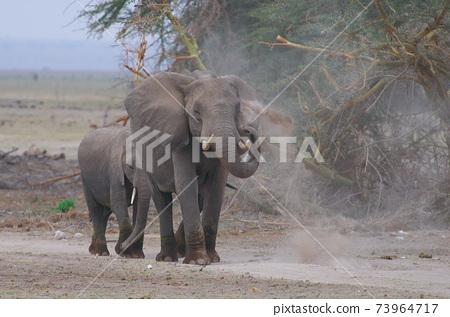 非洲大象的父母和孩子 73964717