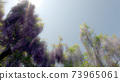 紫藤花6 73965061