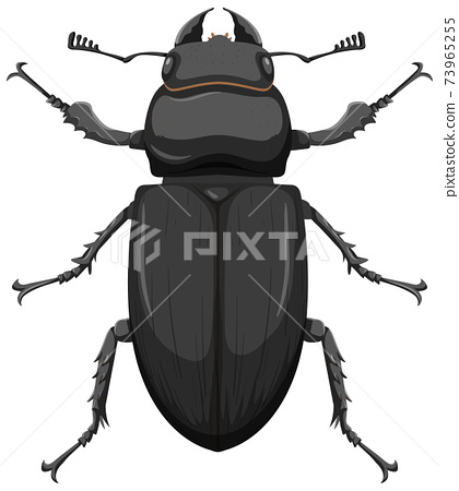 Metallic dung beetle isolated on white background 73965255