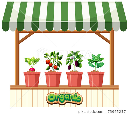 Plant shop with striped awning on white background 73965257