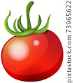 Fresh tomato on white background 73965622