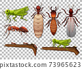 Set of different insects isolated on transparent background 73965623