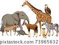 Group of wild african animal on white background 73965632