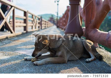 a dog eating food on the bridge 73971310