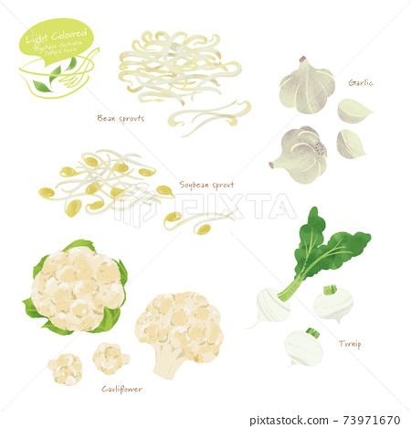 淺色蔬菜2的插圖 73971670
