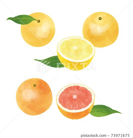 手工繪製的插圖的葡萄柚 73971675