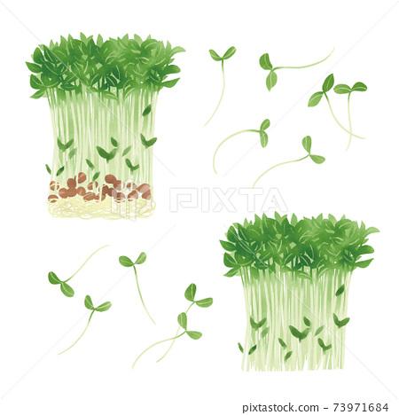 豆芽的手繪插圖 73971684