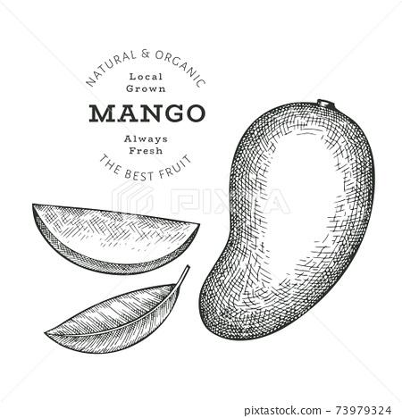Hand drawn sketch style mango. Organic fresh food vector illustration isolated on white background. Retro exotic fruit illustration. Engraved style botanical picture. 73979324