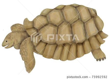 巨型烏龜的手繪插圖的材料 73992592