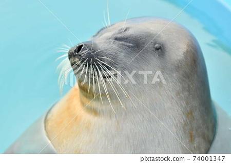 Puka Puka Seal 74001347