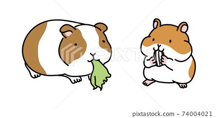 豚鼠和倉鼠的比較插圖 74004021