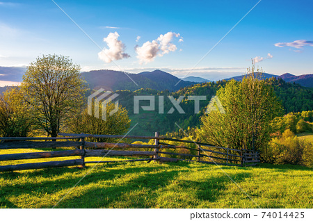 trees behind the fence on the grassy meadow. spring rural landscape in evening light. distant mountain ridge beneath a bright sky with fluffy clouds 74014425