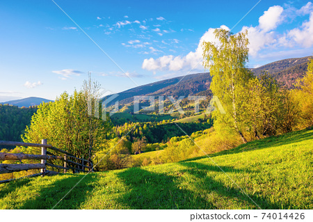 trees behind the fence on the grassy meadow. spring rural landscape in evening light. distant mountain ridge beneath a bright sky with fluffy clouds 74014426