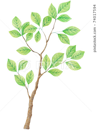 樹枝彩色的鉛筆素描 74017594