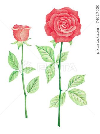 빨간 장미 색연필 그림 74017600