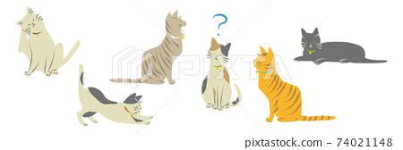 貓見面 74021148