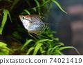 Aquarium fish 74021419