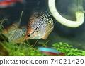 Aquarium fish 74021420