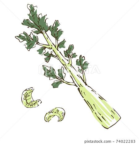 芹菜蔬菜的手繪素描圖 74022283