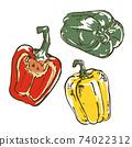 Hand-drawn sketch illustration of paprika vegetables 74022312
