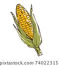 Hand-drawn sketch illustration of corn vegetables 74022315