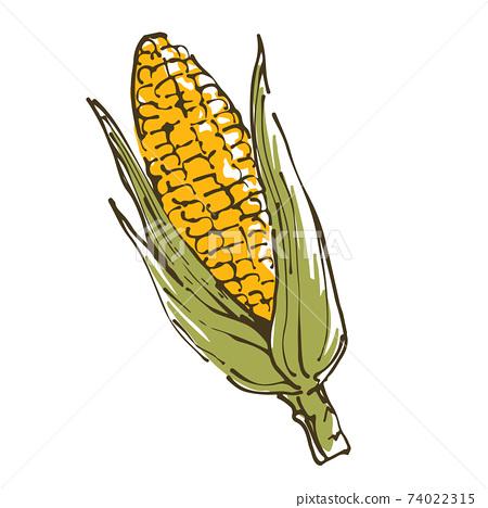 玉米蔬菜的手繪素描圖 74022315