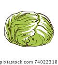 白菜蔬菜的手繪素描圖 74022318