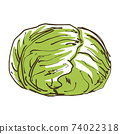 Hand-drawn sketch illustration of cabbage vegetables 74022318