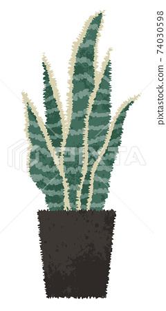 水彩風格觀葉植物虎尾蘭 74030598