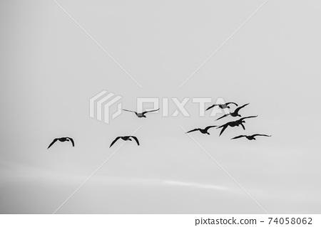 청둥오리,철원군,강원도 74058062