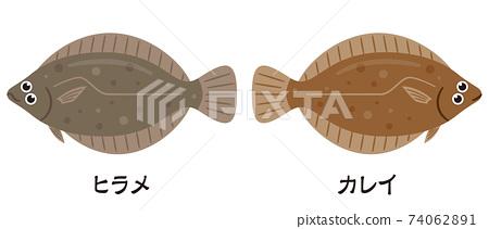 左比目魚和右比目魚 74062891