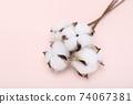 하얀 목화솜다발 74067381