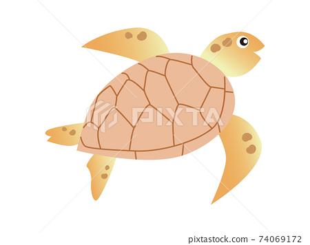 紅海龜 74069172