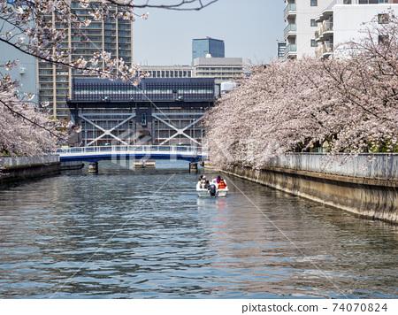 大島河水閘和櫻花 74070824