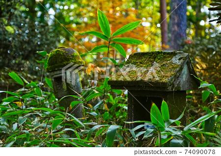 一塊佈滿植物的石sh 74090078