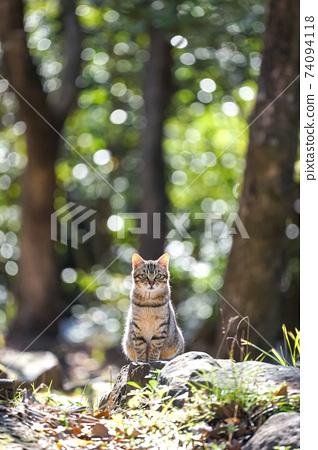流浪貓的肖像 74094118
