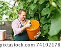 Worker harvesting fresh squash 74102178