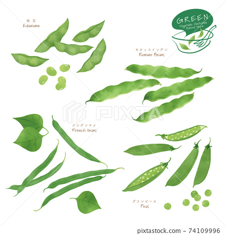 Illustration of green vegetables / Assorted / Hand-drawn style 74109996