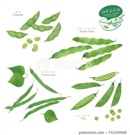 綠色蔬菜插圖/什錦/手繪風格 74109996