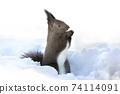 Ezolith Red squirrel 74114091