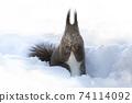 Ezolith Red squirrel 74114092