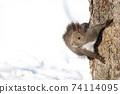 Ezolith Red squirrel 74114095