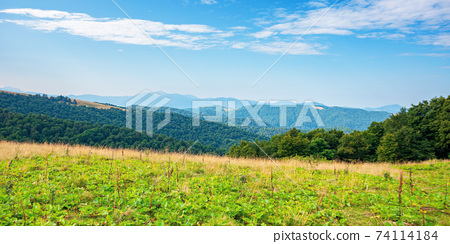 summer landscape of carpathian mountains. beautiful scenery in the morning. beech forest and grassy alpine meadows on the hills of chornohora ridge. bright sunny weather with fluffy clouds on the sky 74114184