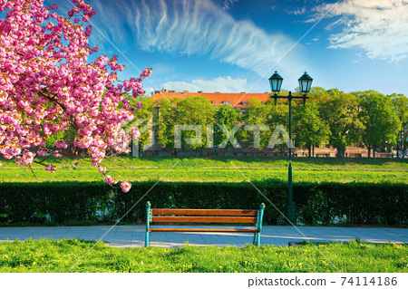 wonderful urban scenery in the morning. bench and lantern near blossoming cherry tree in the park. beautiful sunny weather with fluffy clouds on the sky 74114186