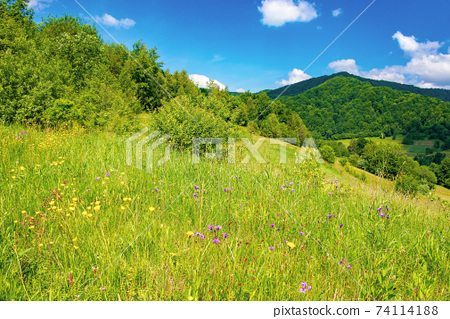 rural landscape of ukrainian carpathians. beautiful summer scenery in mountains. green grassy meadow by the forest on the hill. mountain peak beneath a sky with fluffy clouds on a sunny day 74114188