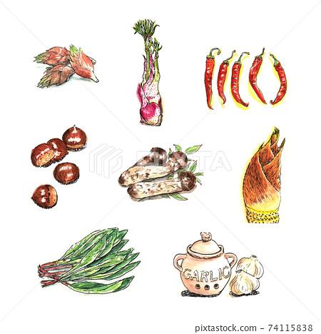水彩畫(日本姜,山道,胡椒,栗子,松茸蘑菇,筍,大蒜,大蒜) 74115838